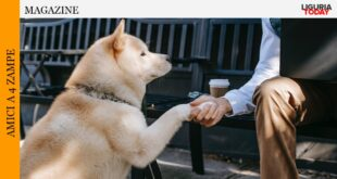 Service Dog Pet Therapy
